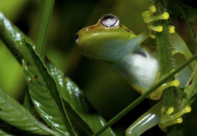 En l'absence de dispersion, un monde à + 4,5°C menacerait près des deux-tiers des espèces, de l'Amazonie, particulièrement les amphibiens.