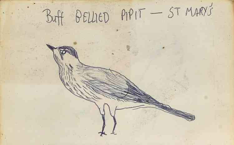 Dessin d'oiseau réalisé par Justin.