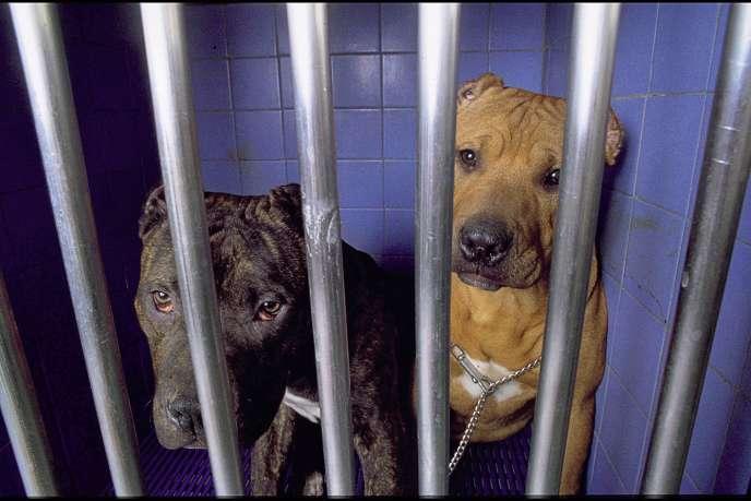 Les parlementaires prônant la clémence pour les chiens accusent les autorités d'avoir recours trop facilement à l'euthanasie.