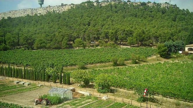 Vignoble du Château de l'Hospitalet, dans l'Aude, AOC Languedoc.