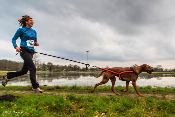 Les femmes, rassurées par la présence d'un animal à leur côté pendant leur jogging, sont nombreuses à pratiquer un canisport.