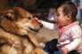 Ces chiens que les tout-petits apprennent à caresser en douceur, à laisser en paix lorsqu'ils boivent ou se reposent, les poussent au même comportement vertueux avec leurs voisins de berceau.