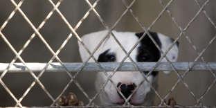 Dans un refuge pour animaux abandonnés, à Montgeron (Essone), en 2010.