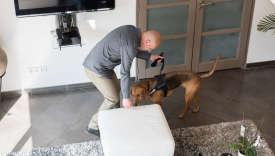 La société toulousaine Eco-Flair déniche les punaises de lit grâce à ses chiens.