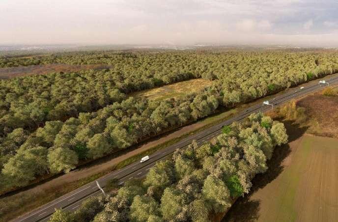 Image de synthèse montrant le projet de création d'une forêt domaniale d'un million d'arbres sur 1350 hectares, à cheval sur sept communes.
