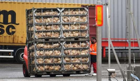 Des poulets vivants sont transportés dans l'usine Doux de Châteaulin (Finistère), le 23 mars.