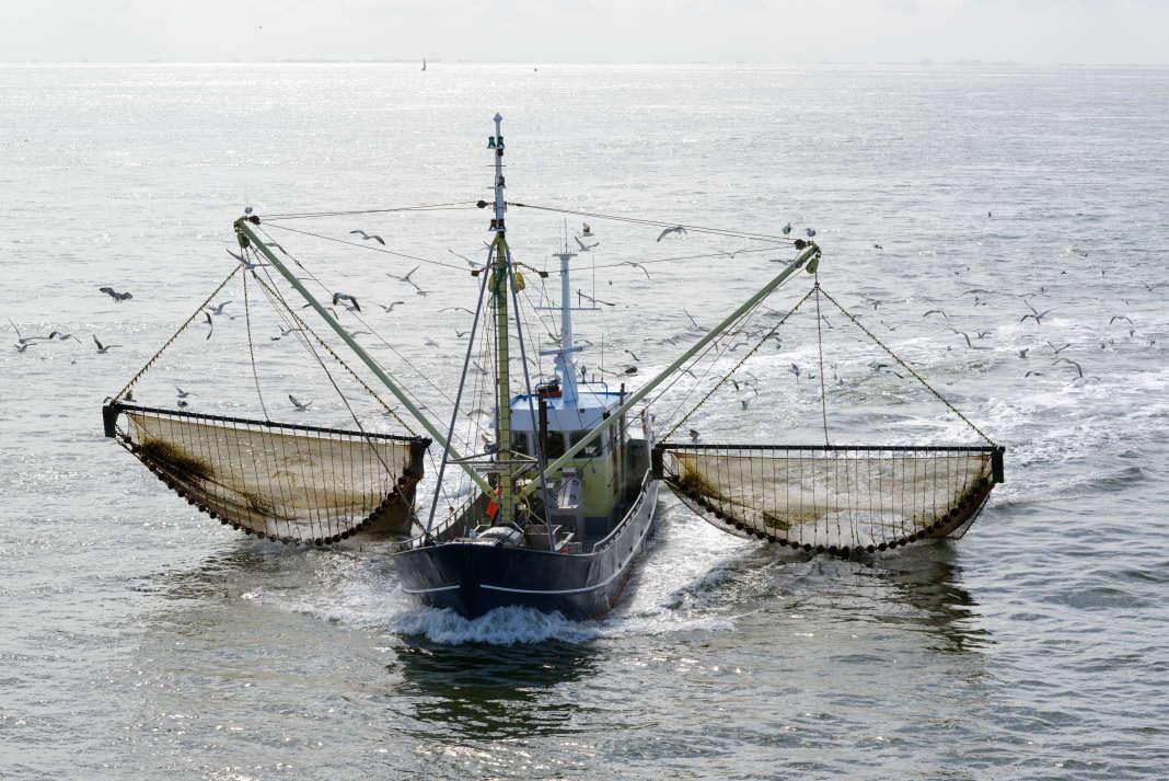 Un bateau de pêche dans la mer des Wadden, aux Pays-Bas.