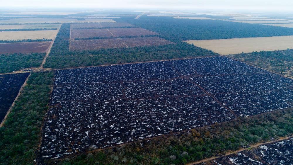 Les forêts sèches du Gran Chaco constituent la plus grande étendue de végétation d'Amerique du Sud après la forêt tropicale d'Amazonie.