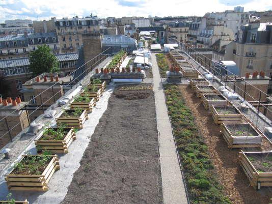 Bacs de culture du potager expérimental d'AgroParisTech, à Paris.