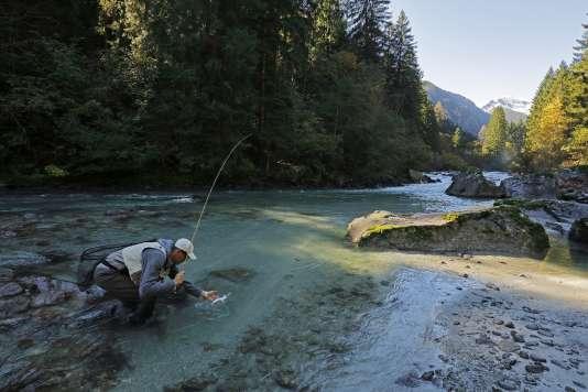 Scène de pêche à la mouche dans une rivière des Dolomites, en Italie.
