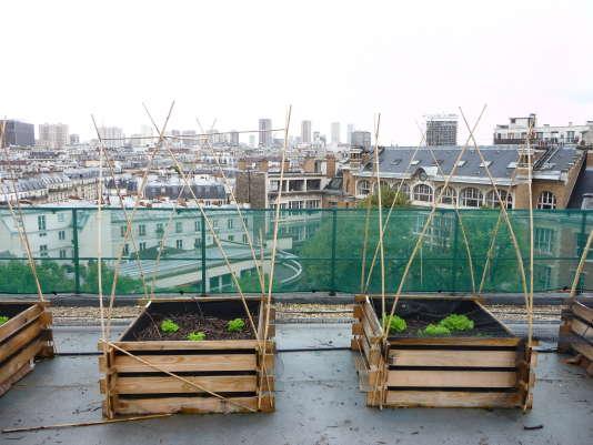 Bacs de culture du potager expérimental d'AgroParisTech,cultivés dans un mélange de compost de déchets verts et de bois broyés, à Paris.