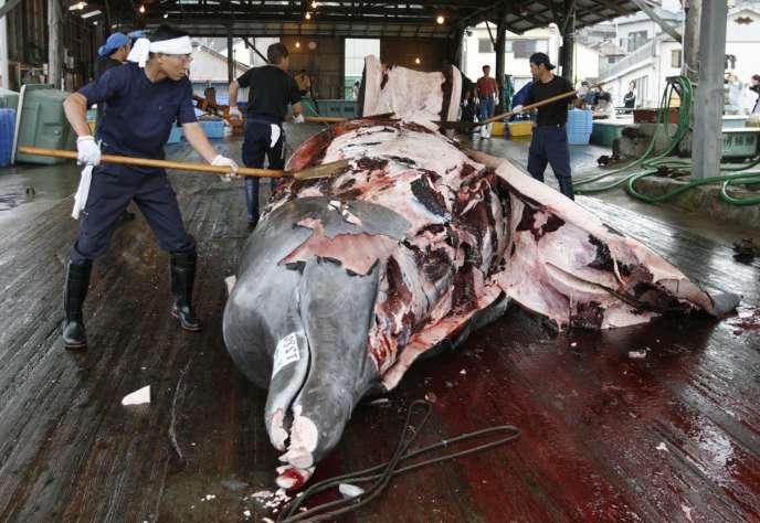 Dépeçage d'une baleine à bec au port de Wada, à Minamiboso, au Japon, en juin 2008.