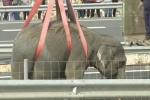 Un éléphant de cirque est mort le 2avril dans un accident de la route, à Pozo Canada, en Espagne.