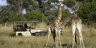 Les premières girafes apparaissent peu après le départ du Savuti Camp.