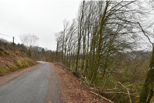 Après l'opération d'élagage près de l'étang de Chaleix (Corrèze).