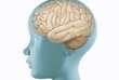 Dans de très rares cas, la maladie de Parkinson touche le cerveau d'enfants.
