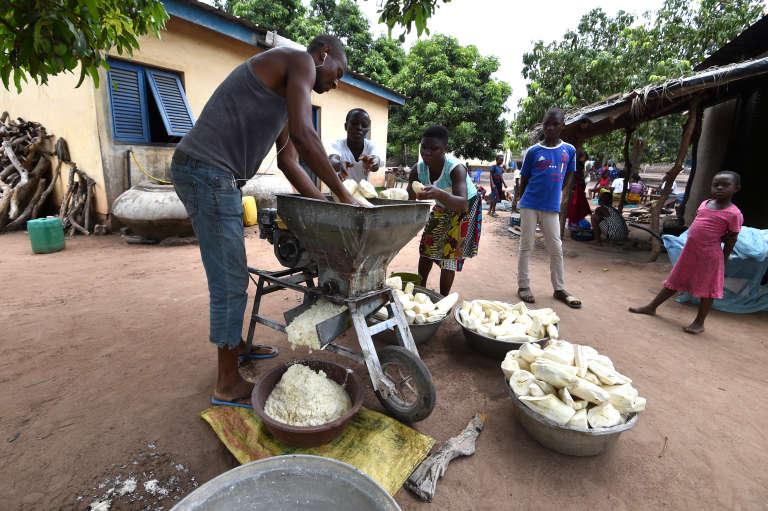Un homme broie du manioc pour la préparation de l'attiéké, en mars 2018, dans le centre de la Côte d'Ivoire.