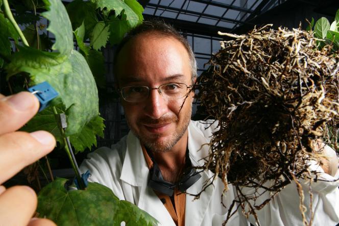 Stefano Mancuso, neurobiologiste des plantes.