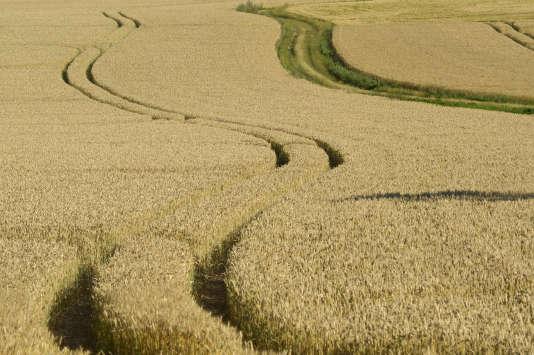 Les cultures intensives mettent notamment en péril la biocapacité de la planète.