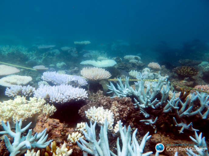 Un écosystème durablement altéré par le réchauffement climatique.