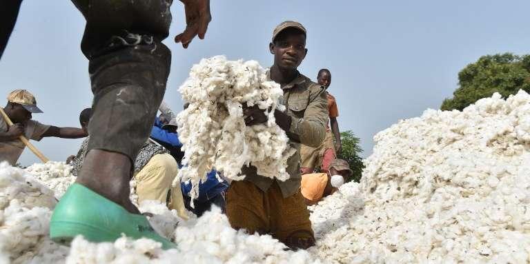 Des cultivateurs de coton au village de Kanawolo, près de Korhogo, en Côte d'Ivoire, en décembre 2015.