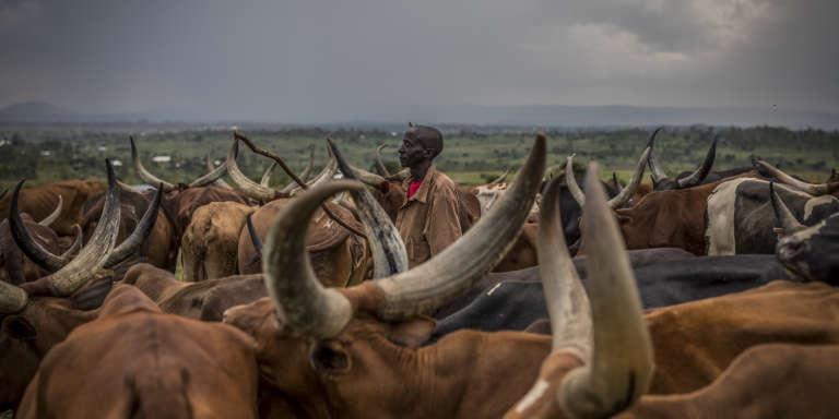 Eleveur, Kalyebara a fui son villageen flammes à 80km plus au nord; il est déplacé à Bunia, en Ituri, dans l'est de la RDC.