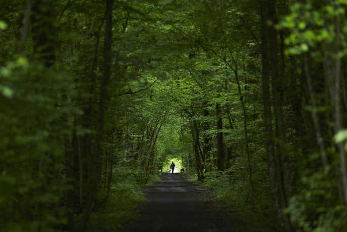 On estime à environ 600 millions le nombre d'incursions annuelles dans les forêts françaises. Autrement dit, chaque seconde, seize personnes pénètrent dans une forêt en France. Ici, le boisDurand, à Ferney-Voltaire (Ain).