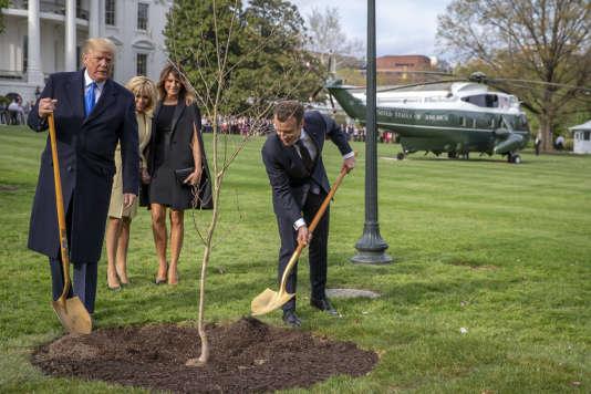 Emmanuel Macron et Donald Trump, plantent un chêne sur la pelouse de la Maison Blanche à Washington DC, le 23 avril.