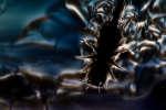 Des bancs gigantesques de minuscules organismes marins, comme le krill, pourraient créer suffisamment de turbulences pour jouer un rôle crucial dans le mélange des eaux océaniques.