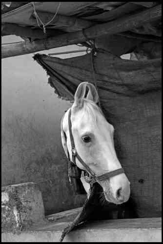 Jean Gaumy :« Un jour, nous avions décidé d'échanger fraternellement quelques-unes de nos photographies. Je lui ai aussitôt demandé cette photographie d'un cheval au Rajasthan. Sa solide construction et son instantanéité me revenaient souvent en tête. Elle parle de l'émerveillement, de l'attention et de l'intelligente curiosité qu'Abbas portait au monde. »