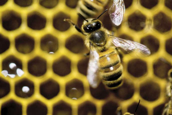 Au-delà de l'effet sur les abeilles, ce sont les effets en cascade des néonicotinoïdes sur d'autres espèces animales qui ont été mis en évidence.