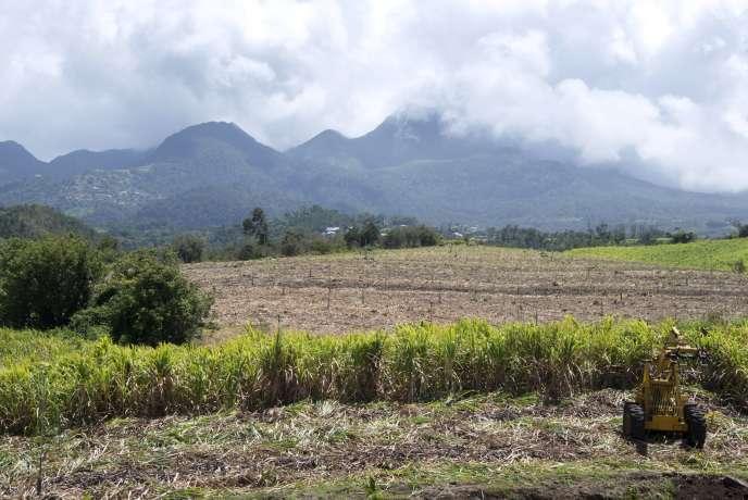 La Guadeloupe, au coeur des Antilles, fait désormais partie des trajectoires incontournables qu'empruntent les substances illicites.