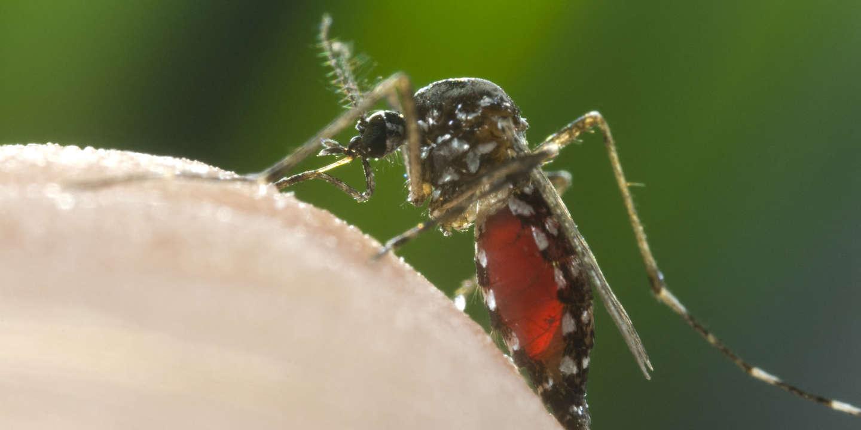 Le moustique-tigre sous surveillance dans 42 départements