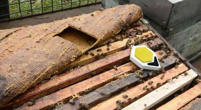 Hostabee a créé un module connecté pouvant être installé dans tout type de ruche.
