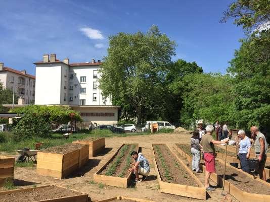 Des jardins partagés, entretenus par La Légumerie, séparent la cité-jardin (en arrière-plan) du Bio District lyonnais.