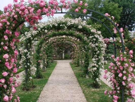 La Roseraie de L'Haÿ-les-Roses, au sud de Paris, est au pic de sa beauté pendant les deux premières semaines du mois de juin.