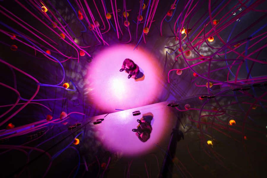 «Sonic Jungle est une forêt cybernétique de 100lianes longilignes suspendues agrémentées de 100fruits chimériques sonores qui invitent le spectateur à la traverser et à tendre l'oreille à cette symphonie supernaturelle. »