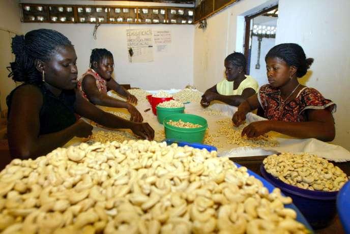 Des jeunes femmes trient des noix de cajou, en 2002, à Quinhamel (Guinée-Bissau).