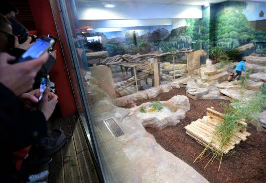 Le zoo de Beauval a été cambriolé dans la nuit de samedi à dimanche.