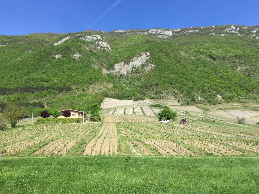 Les vignes de Chignin, en Savoie.