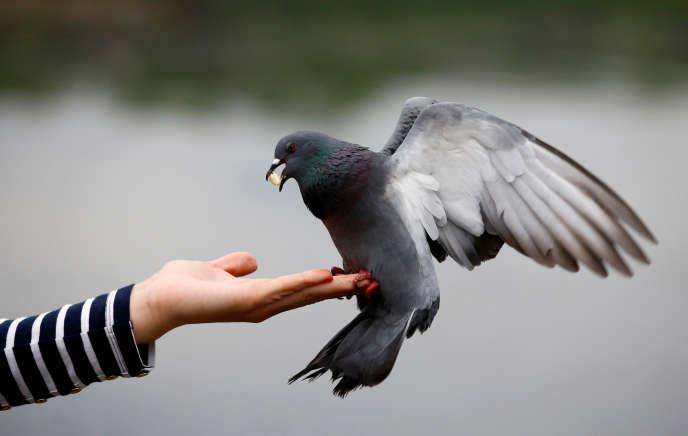 Une femme nourrit un pigeon dans un parc de Minsk, en Biélorussie, le 16 mai.