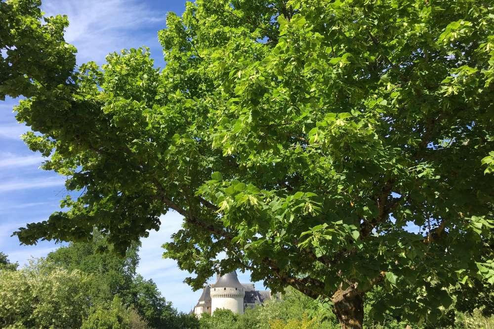 Propriété successive de Catherine de Médicis et de Diane de Poitiers, le château de Chaumont-sur-Loire a été acheté, dans la seconde moitié du XIXe siècle, par une riche héritière, Marie Say, avant son mariage avec le prince Amédée de Broglie. Le château, avec ses luxueuses dépendances et son parc, deviendra la propriété de l'Etat en 1938, et appartient aujourd'hui à la région Centre-Val de Loire. Il forme avec le Festival international des jardins etle Centre d'arts et de nature le Domaine de Chaumont-sur-Loire, dirigédepuis plus de dix ans par Chantal Colleu-Dumond.