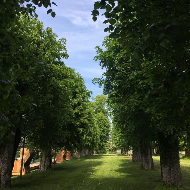 L'alignement de tilleuls a été plantéau XIXe siècle par le paysagiste Henri Duchêne. En 2012, parallèlement à l'aménagement des prés du Goualoup, le paysagiste Louis Benech a supervisé le rajeunissement des plantations du parc historique.