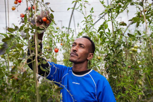 Hassan à Aronnes (Allier) aux Jardins de cocagne, une entreprise solidaire qui accompagne les personnes vers l'emploi, le 12 septembre 2017.