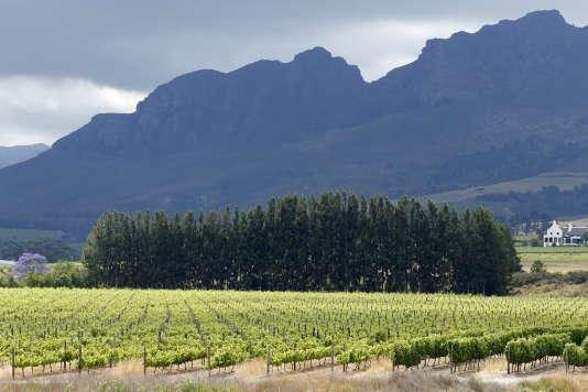 Des vignobles près Stellenbosch, en Afrique du Sud