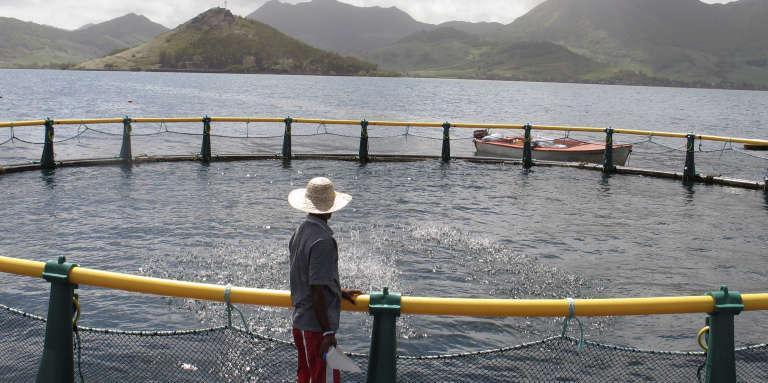 Un bassin d'élevage de poissons de la Ferme marine de Mahébourg, dans le sud-est de l'île Maurice, en 2007.