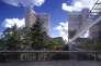 Vue,depuis l'esplanade, du sommet des grands pins, avec à l'arrière-plan deux des quatre tours dela BnF.