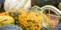 Deux femmes, résidant en région parisienne, ont présenté une chute des cheveux et des poils après avoir consommé de la courge, indique un article publié dans la revue «JAMA Dermatology».