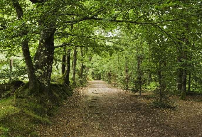 La forêt de Broceliande, en Bretagne.