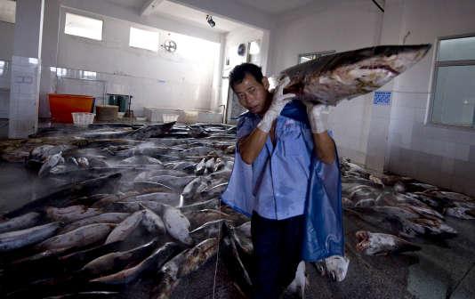 Cette photo prise le 26 juillet 2011 montre un ouvrier chinois transportant un requin abattu dans une usine de traitement à Pu Qi (Chine). Cette usine, qui traite environ six cents requins-baleines par an, a été qualifiée de plus grand abattoir au monde pour les espèces menacées.